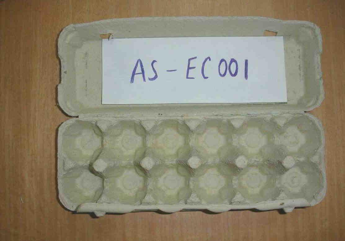 Paper 12pcs egg carton